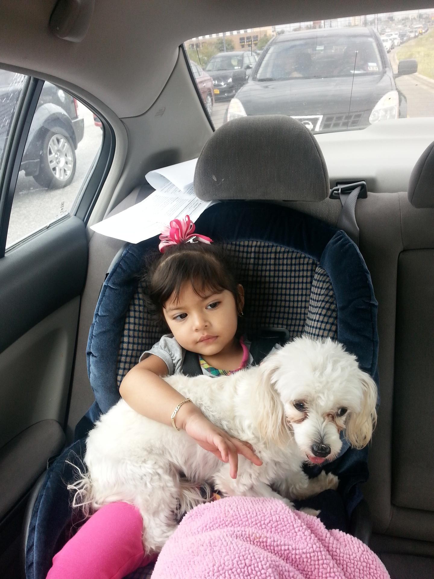 Poodle Car Ride